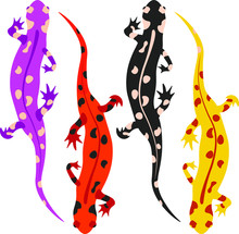 Several Animals In Different Colors. Salamanders For Design And Illustration.