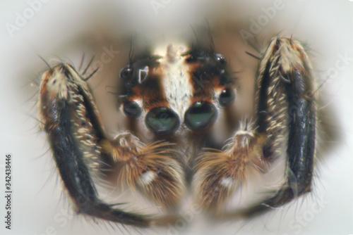 spider arthropod weaving a web arthropod weaving a web Canvas Print