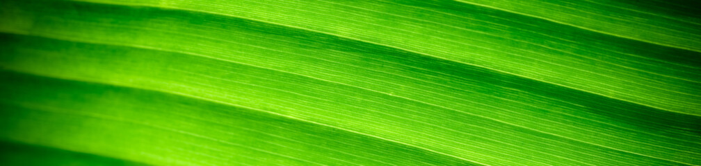 Beautiful nature view of green leaf on blurred greenery background in garden with copy space using as summer background natural green leaves plants landscape, ecology, fresh cover page concept.