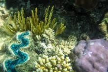 Underwater Sealife Great Barri...