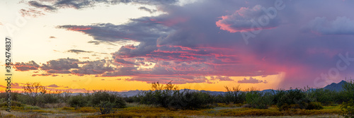 Panoramic image of the Sonoran Desert of Arizona during sunset with distant rain and blue skies. #342474837