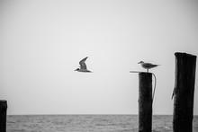 Black And White Artistic Photo...