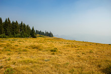 Green And Gold Grassy Meadow A...