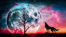 Silhouette Wolf Standing By Se...