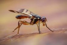 Bee Ants