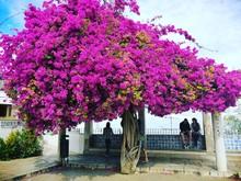Tree Full Of Flowers