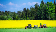 Green Forest, Yellow Field Wit...
