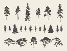Set Silhouettes Trees Pine Fir...