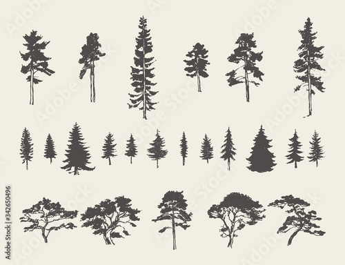 Carta da parati Set silhouettes trees pine fir cedar vector sketch