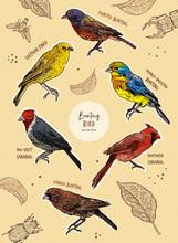 Set Of Bunting Bird, Hand Draw Sketch Vector.