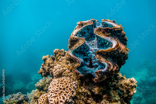 Giant clam resting among colorful coral reef Tapéta, Fotótapéta