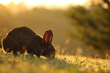 Retrato De Conejo Al Contraluz...