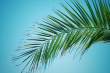 Low Angle View Of Palm Tree Ag...