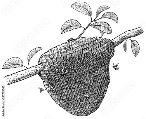 Fotomural Honeycomb and bees on tree illustration, drawing, engraving, ink, line art, vect