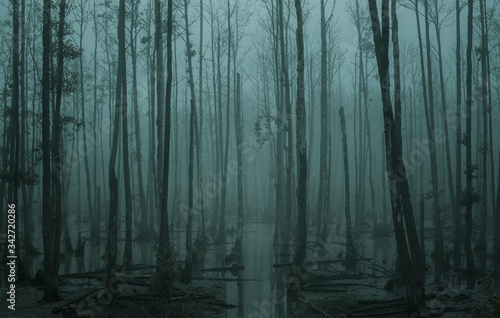 Fotografía Empty, misty swamp in the moody forest with copy space