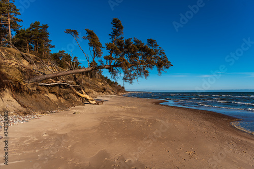 Obraz the baltic sea and pine leaning over the beach sand - fototapety do salonu
