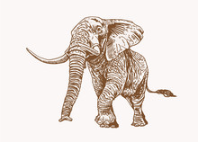 Graphical Vintage Elephant Wal...