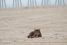 Cat Sitting On The Beach. Los ...