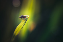 A Little Fly On The Grass Leaf