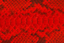 Full Frame Shot Of Red Patterns
