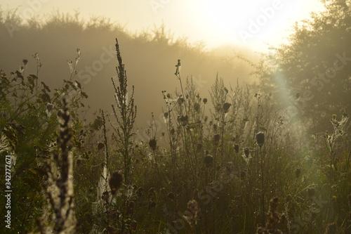 Fototapeta Jesienny poranek wschód słońca, mgła, pajęczyna, rosa obraz