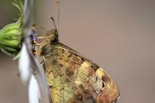 Gros Plan D'un Papillon Sur Une Marguerite Dans Le Jardin
