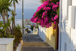 Flowers hanging from a wall on a narrow street in the village of Oia, Santorini