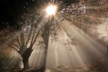Sun Rays Penetrating Through T...