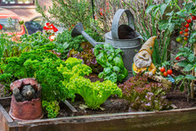 Garden Gnome Ornament Figurine Among Different Species Of Lettuce, Herbs, Tomatoes And Greens In Wooden Box Of Raised Square Foot Garden On Balcony