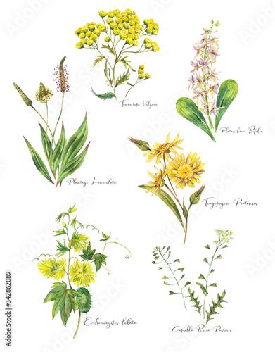 Leinwandbilder - Vintage watercolor set of summer meadow wildflowers.