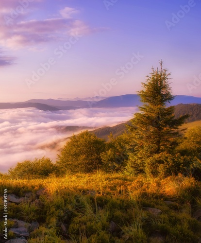 foggy summer sunrise image, vertical dawn scenery, awesome morning  landscape, beautiful nature background in the mountains, Carpathians, Ukraine, Europe #342891255