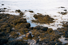 Stones In Algae On The Ocean I...