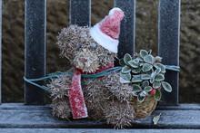 Close-up Of Teddy Bear Wearing Santas Hat