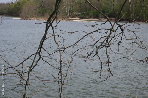 Fotografie, Tablou Fishing Red and White Bobber Stuck In Tree