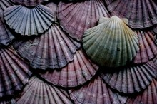 Full Frame Shot Of Sea Shells