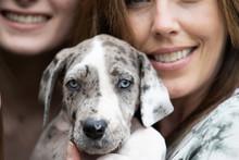 Gray Great Dane Puppy Dog