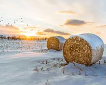 Winter Crop Field Sunset
