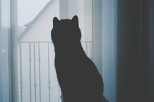 Close-up Of Silhouette Cat Sitting By Window At Home