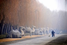 Rear View Of Man Walking On Sacred Way Leading Towards Ming Tombs