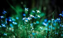 Blue Flowers Growing On Field