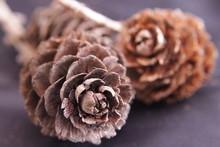 Close-up Of Pine Cones On Ground