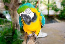 Macaw Parrot Perching On Branch
