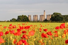 Poppy Field In Bloom With Cool...