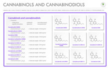 Cannabinol And Cannabinodiol CBN With Structural Formulas In Cannabis Horizontal Business Infographic Illustration About Cannabis As Herbal Alternative Medicine And Chemical Therapy, Vector.
