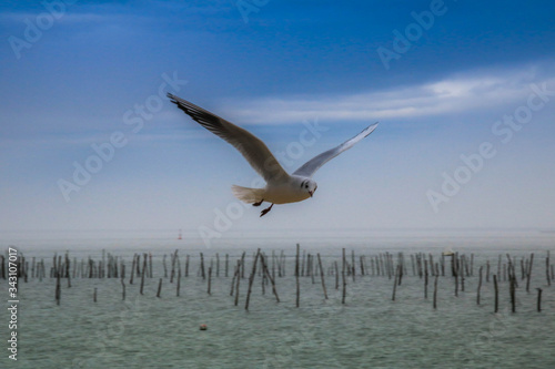 Photo l oiseau bleu du bassin d'Arcachon