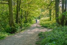 Clinkham Wood Local Nature Re...