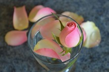Close-up Of Pink Rose Bud In Glass Vase On Table