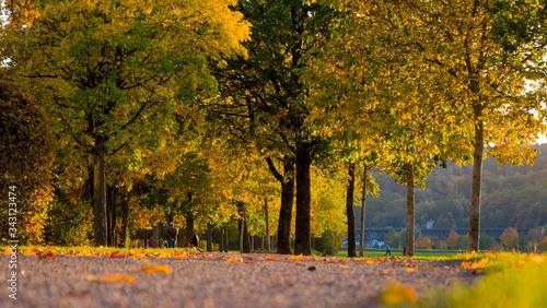 Herbstlandschaft an der Allee mit goldenen Bäumen Canvas Print