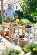 A Senior Gardener Man In His G...