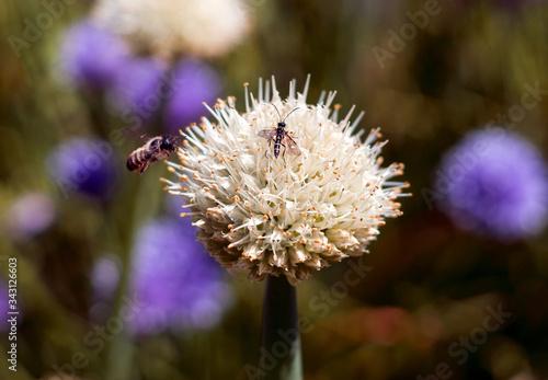Fototapeta Biały kwiat i owady obraz